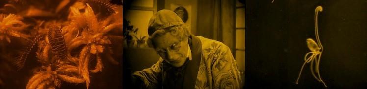 En el Bulwer de Nosferatu, homenaje doble, Paracelso, y Edward Bulwer Lytton