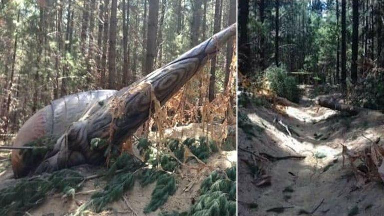Difunden fotografías de un presunto OVNI caído en Australia