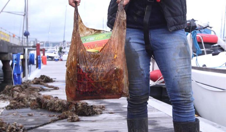 Estas bolsas que se suponían biodegradables siguen «intactas» luego de 3 años enterradas