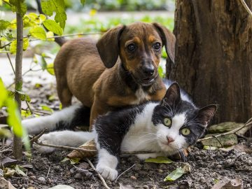 Este es el primer banco de sangre para perros y gatos de México
