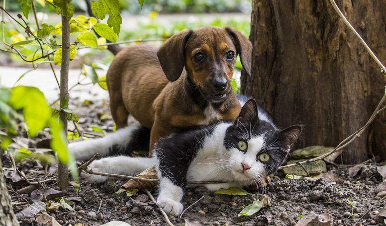 Este es el primer banco de sangre para perros y gatos de México (Vídeo)