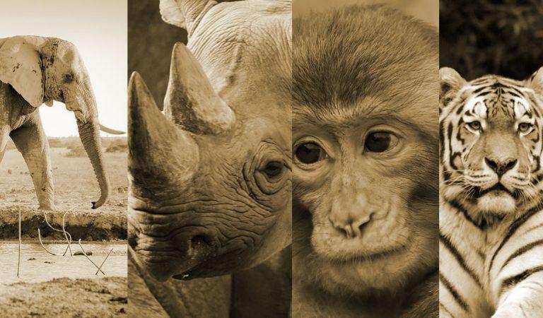 Hemos ingresado a la sexta extinción masiva de especies, afirma la ONU
