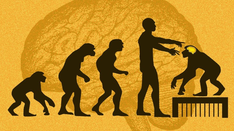Crean monos transgénicos con genes de cerebro humanos