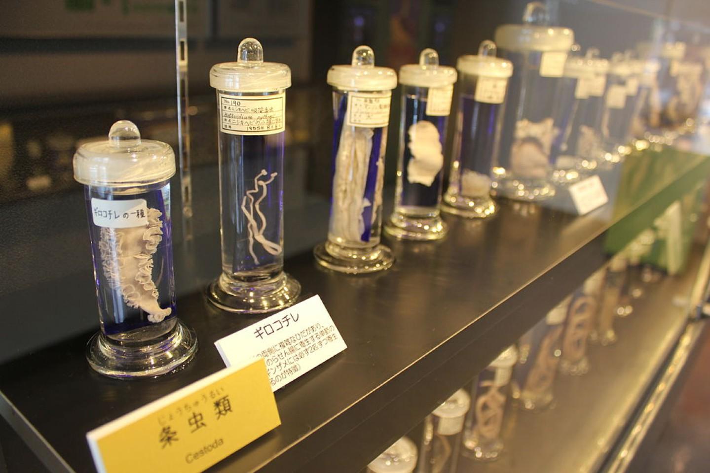 En el interior del Museo Parasitológico de Meguro