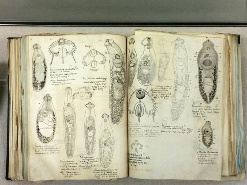 Cuaderno de parásitos en el Museo Parasitológico de Meguro