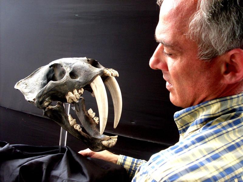 Especialista Klaus Hönninger sosteniendo cráneo fosilizado de un Smilodon