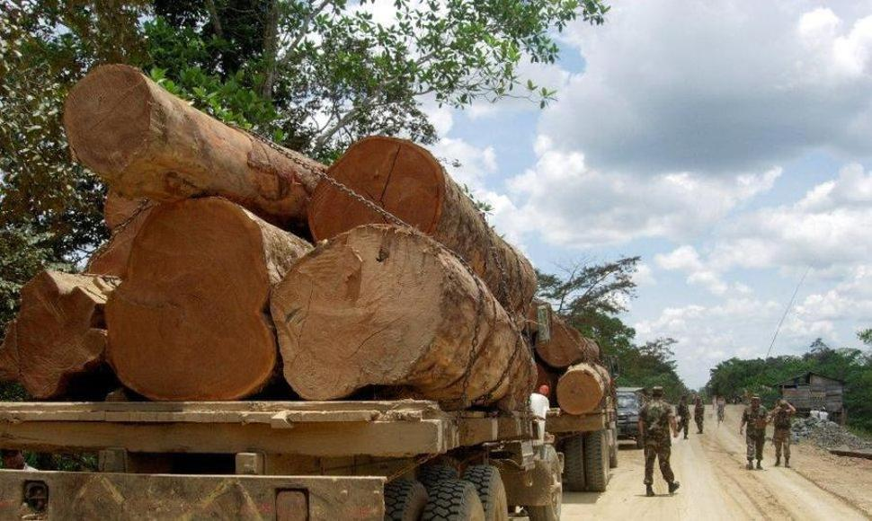 Árboles talados en la Amazonía peruana