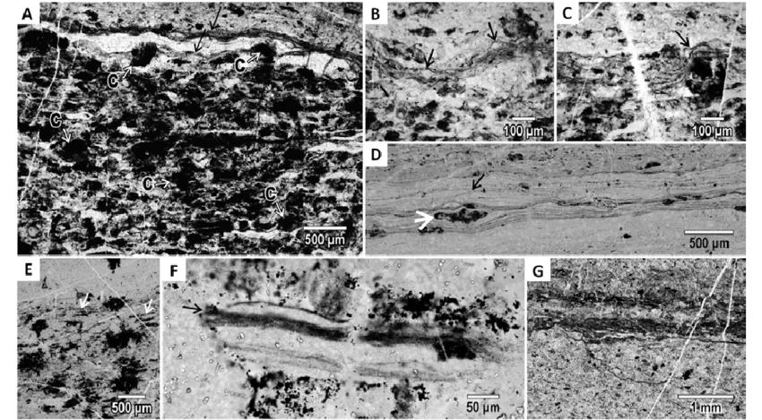 Tipos de material carbonoso en el Josefsdal Chert, Sudáfrica