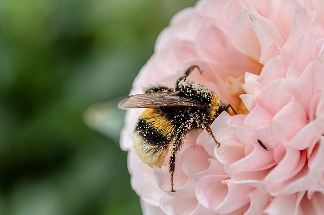 Las abejas realizan la labor de polinización que hace posible que muchas plantas den sus frutos