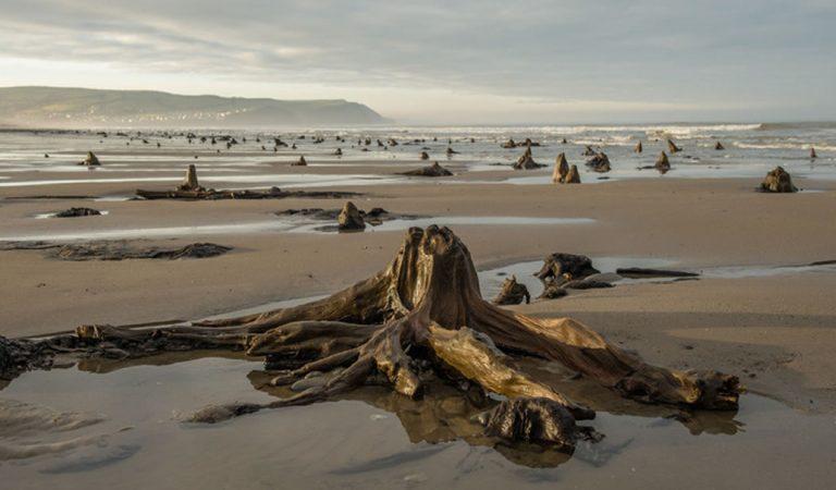 Bosque prehistórico de hace 4.500 años reaparece luego de una tormenta