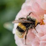 Colombia: Anulan fallo que ordenaba proteger la vida de las abejas