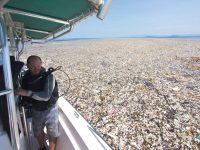 Contaminación por plásticos está matando las bacterias que producen el oxígeno que respiramos