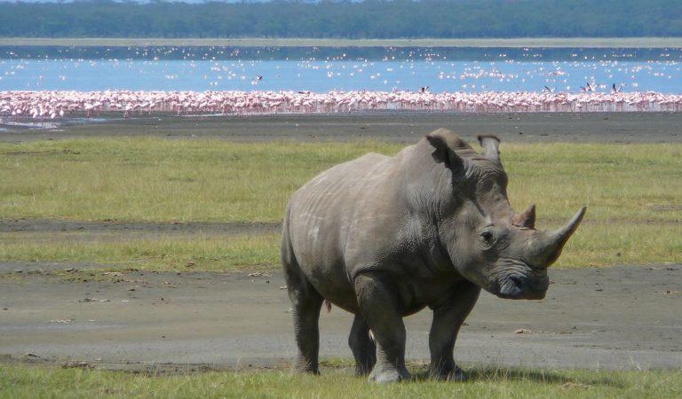 El lago Nakuru de Kenia ha muerto, afirma Ministro de Turismo