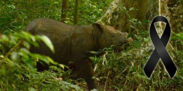 Es oficial: el último rinoceronte macho de Sumatra ha muerto