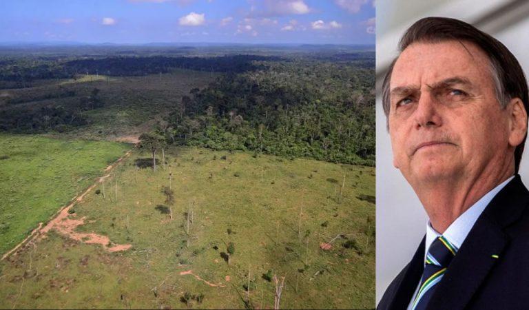 «Era Bolsonaro» está causando la deforestación de 19 hectáreas por hora en la Amazonía