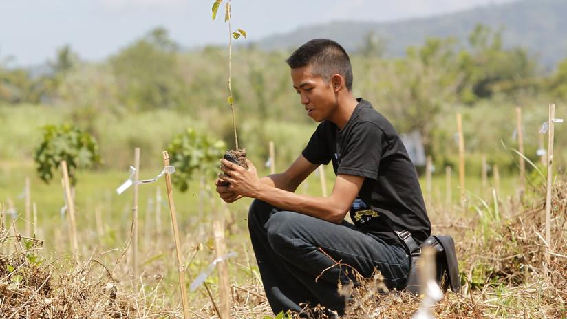 Un estudiante filipino plantando árboles en la selva tropical al sur de Manila, el 23 de febrero de 2011