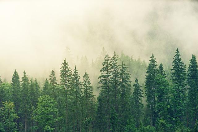 Los árboles están conectados por una red subterránea formada por hongos y microbios, plantea un reciente estudio.