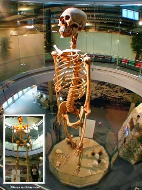 Reconstrucción del gigante de 7 metros, exhibido actualmente en Europa
