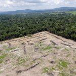 Gobierno de Brasil se prepara para depredar la Amazonía y convertirla en una zona de extracción minera