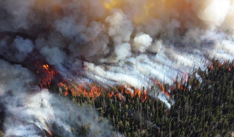 Incendio forestal destruye más de 4.000 hectáreas en México y mata a animales en peligro de extinción