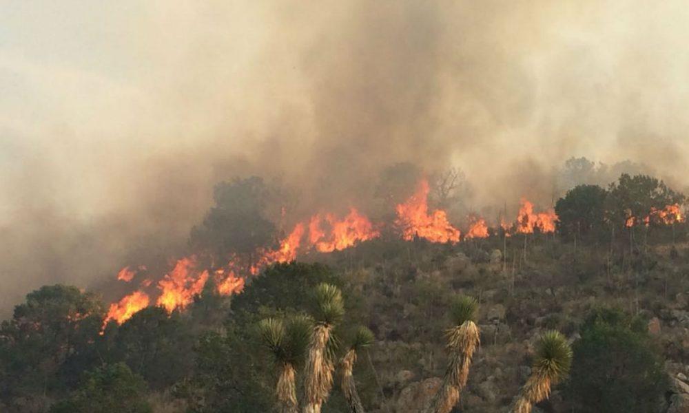 Incendio forestal en Villa Reyes