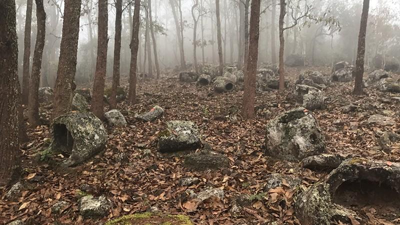 Jarrones megalíticos en el bosque
