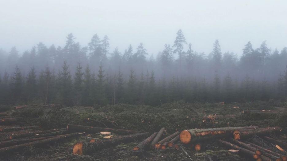 La desmedida deforestación ha causado un incremento de los efectos negativos del cambio climático