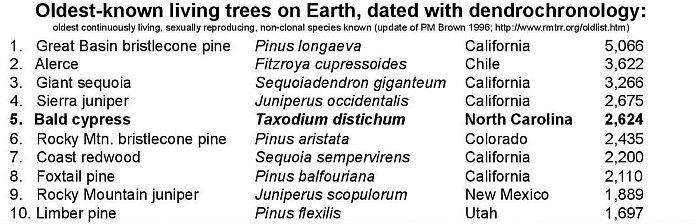 Los 10 árboles más antiguos del mundo
