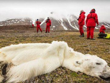 ONU alerta: Se ha perdido una gran parte de la naturaleza y lo que queda está en decadencia