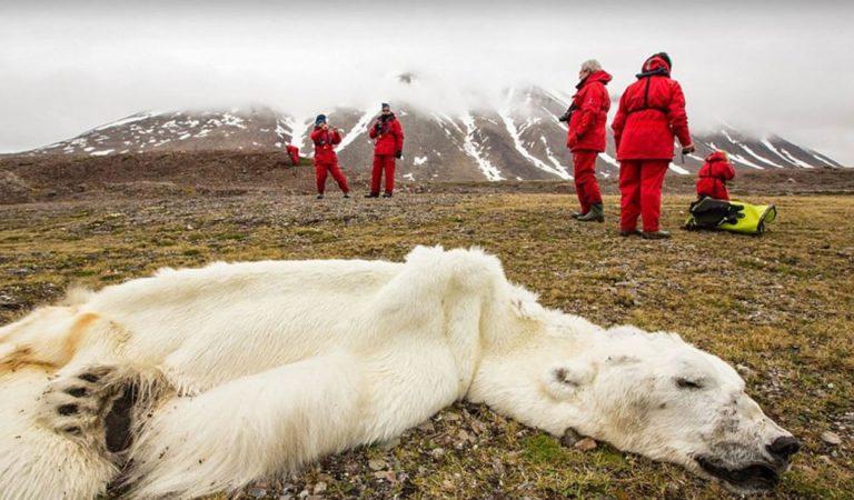 ONU: Hemos perdido una gran parte de la naturaleza y lo que queda está en decadencia
