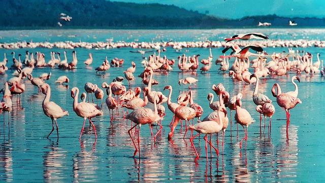 El lago Kakuru de Kenia es famoso por sus flamencos