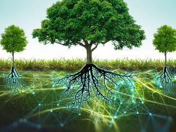 Revelan una gran red subterránea que conecta a los árboles, la «Wood wide web»