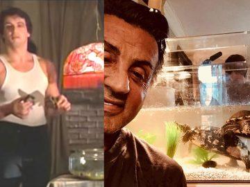 Sylvester Stallone conservó dos tortugas de la película «Rocky» y ahora tienen 44 años