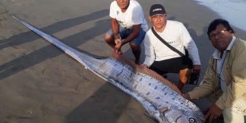 Tres días antes del terremoto un pez remo apareció en la costa norte de Perú
