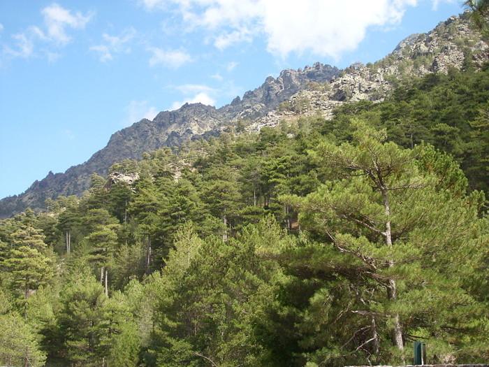 Los dominios del gato Montés cerca de los bosques de Asco en Córcega