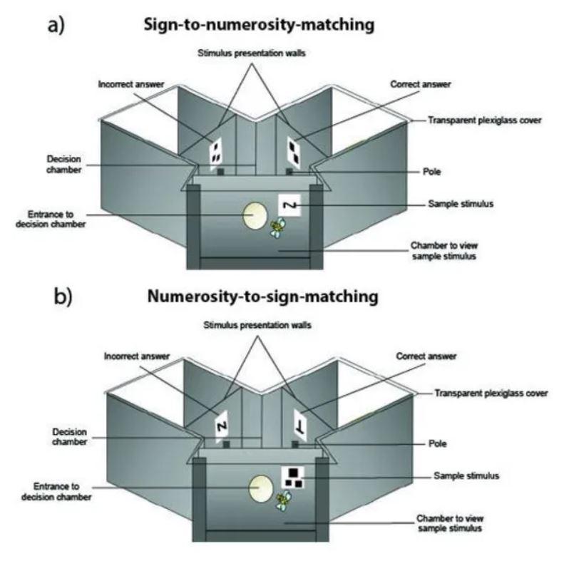 Diagrama que muestra el aparato experimental
