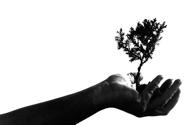 Según un estudio realizado, el territorio disponible en el planeta para sembrar árboles no es suficiente para dismunuir el CO2 en la atmósfera. Usar más parte de la Tierra para sembrar árboles nos dejaría sin tierras de cultivo y muchos morirían de hambre.