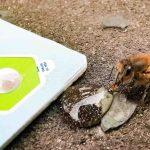 Ahora puedes usar unas tarjetas de bolsillo para salvar abejas hambrientas en las aceras