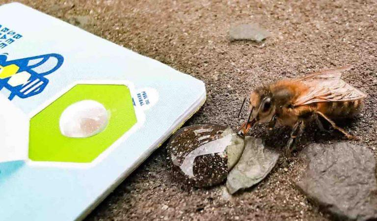 Ahora puedes usar unas tarjetas de bolsillo para salvar abejas hambrientas