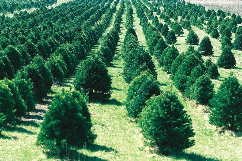 Un nuevo estudio muestra que plantar árboles para almacenar el dióxido de carbono que han recogido de la atmósfera no es una opción viable para contrarrestar las emisiones no mitigadas de la quema de combustibles fósiles