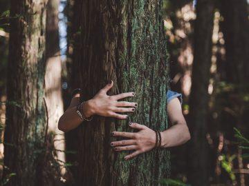 Biólogo afirma que los árboles hablan un idioma que podemos aprender