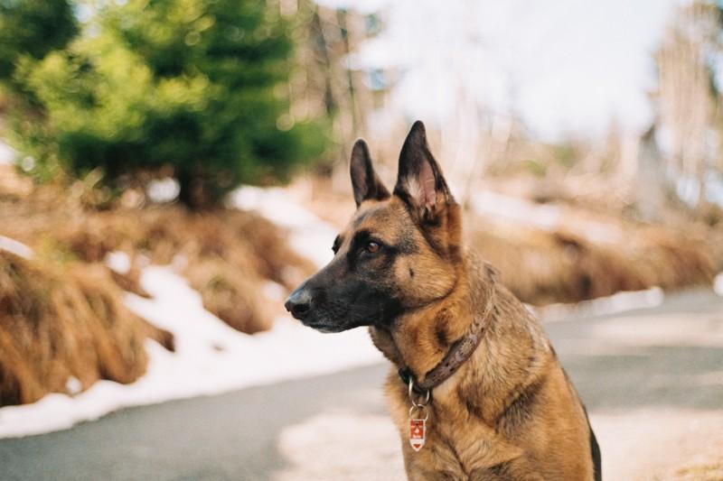 Los perros y su rol para percibir las energías y el mundo sobrenatural