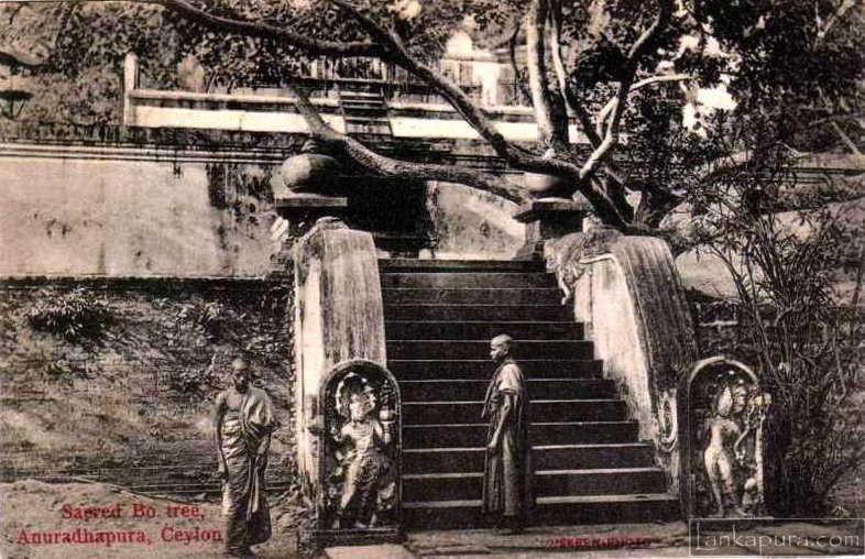 Monjes budistas cerca de Sri Maha Bodhi, Anuradhapura Sri Lanka, foto de 1900. Uno de los lugares más sagrados del antiguo Ceylán