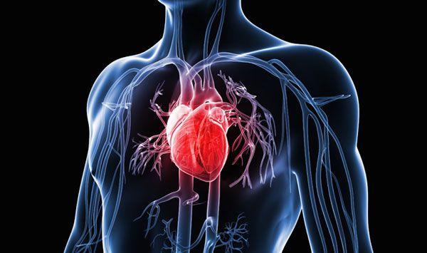 Investigaciones revelan que el corazón posee una «mente» cuántica