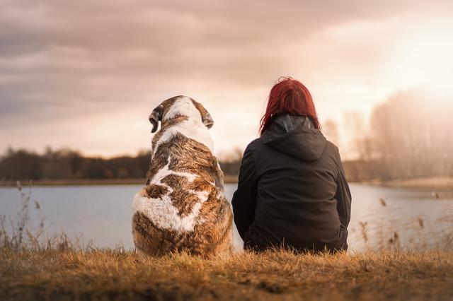 Los perros y su rol para percibir las energías de los demás y el mundo sobrenatural
