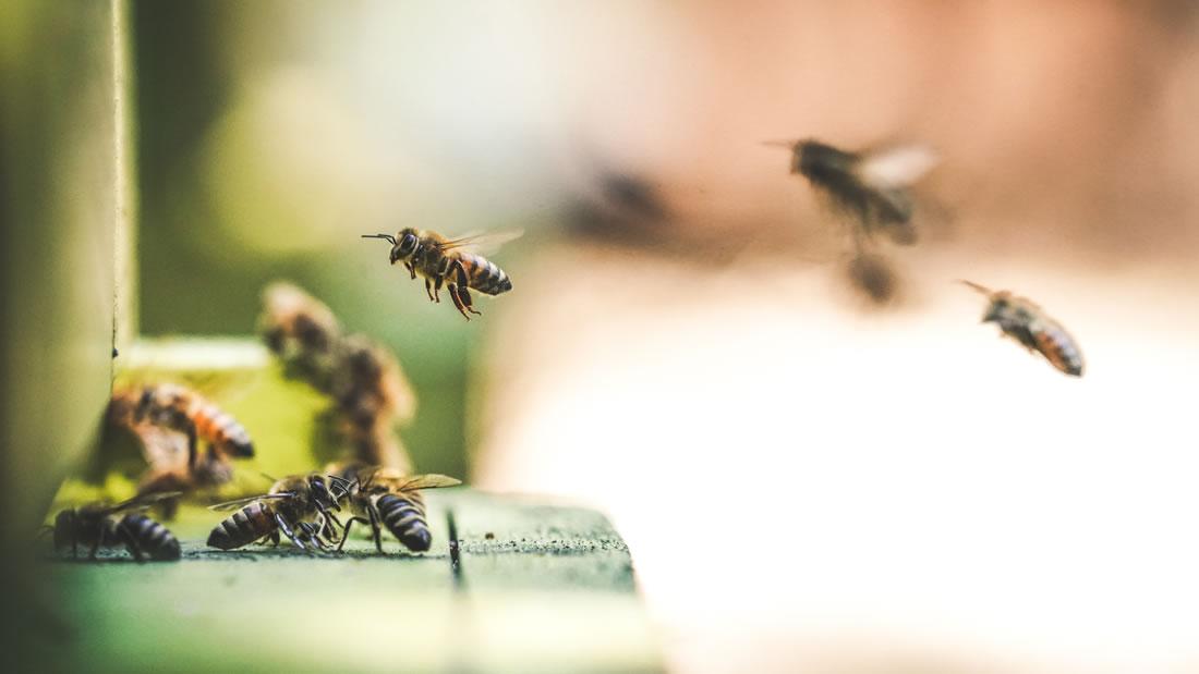 Hallan un nido de abeja hecho completamente de basura plástica en Argentina