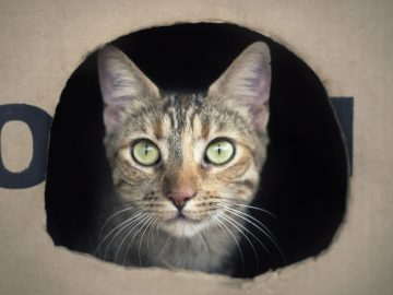 Hay una manera de salvar al gato de Schrödinger, afirman físicos