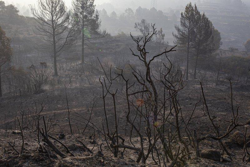 El paisaje quemado después de un incendio forestal en la Torre de l'Espanyol, cerca de Tarragona, España, el jueves 27 de junio de 2019