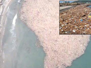 Isla de basura se forma en Colombia contaminando el Atlántico