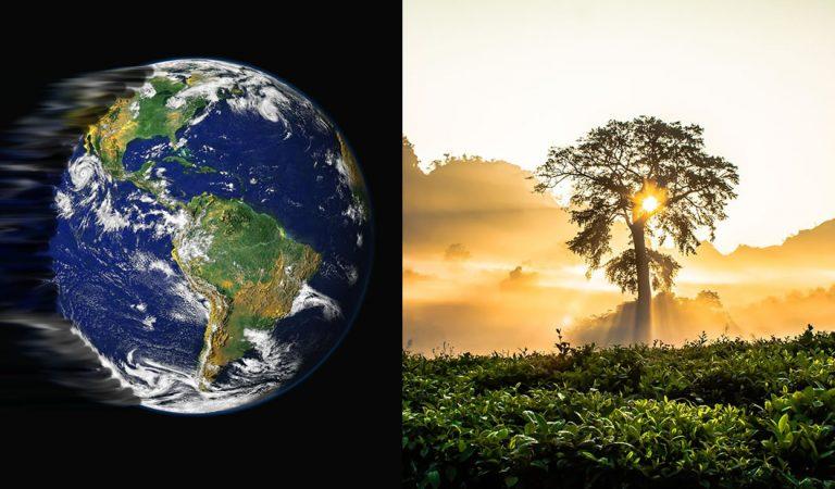 La atmósfera está tan contaminada que ni plantar árboles ayudará, sugiere una investigación